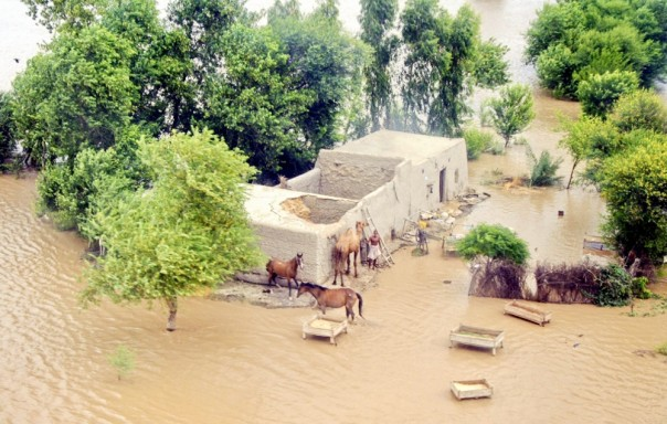 A mud house surrounded by floodwater in flood-hit Narowal district, Punjab province. PHOTO/Punjab PDMA
