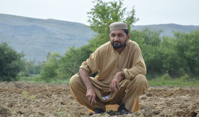 Pakistan's crop yields hit by erratic rainfall