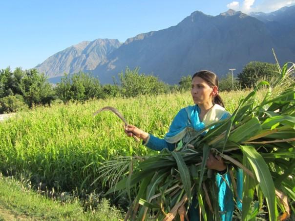 Farmer Bibi Baskiya describes the sudden cloudburst that damaged her maize crop just a few days from harvest time in Danyore, a village in Gilgit district in Pakistan's Upper Indus Basin area. TRF/Saleem Shaikh
